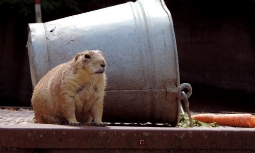 Groundhogs: Predicting Spring