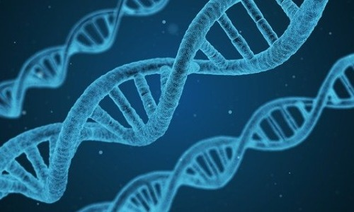 Are We a Product of Our Genes Or Environment?