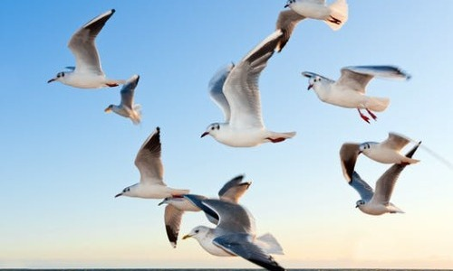 Why Do Some Birds Migrate And Others Don't?