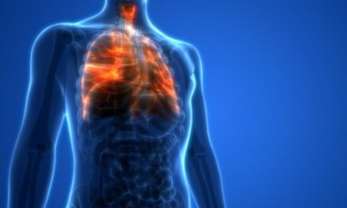 The Right Lung Is Bigger Than The Left Lung