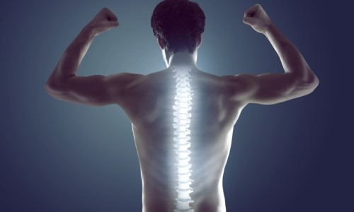 Spine Is Crucial To The Human Body