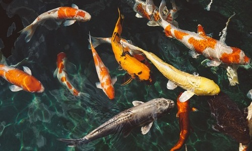 Fish Becoming Extinct