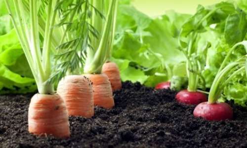 Organic Food Means No Pesticides