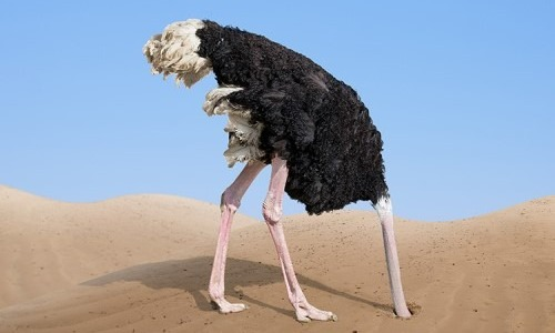 Ostriches Hide Their Heads In Sand When In Danger