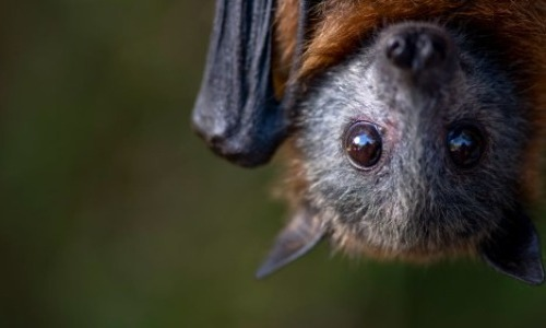 Bats Are Blind