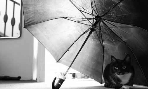Opening The Umbrella Indoors