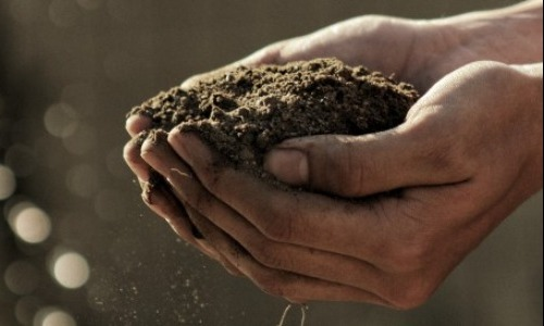 Soil Erosion Can Be Fixed With Veganism