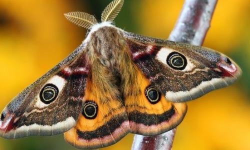 Moth And Butterflies Like Animal Tears