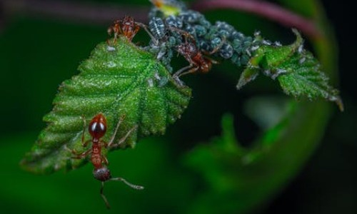 Camouflage Tactic of Assassin Bugs