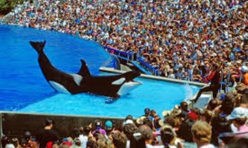 When Killer Whales Kill