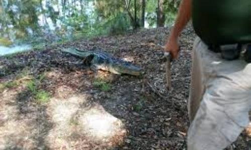 Alligator Attacks Woman