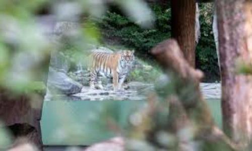 Tiger Kills Woman At Zoo