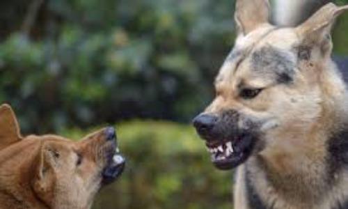 Wild Dog Attacks Beautician